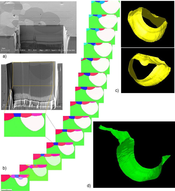 Tomographic orientation microscopy ( 3D EBSD ) on steels