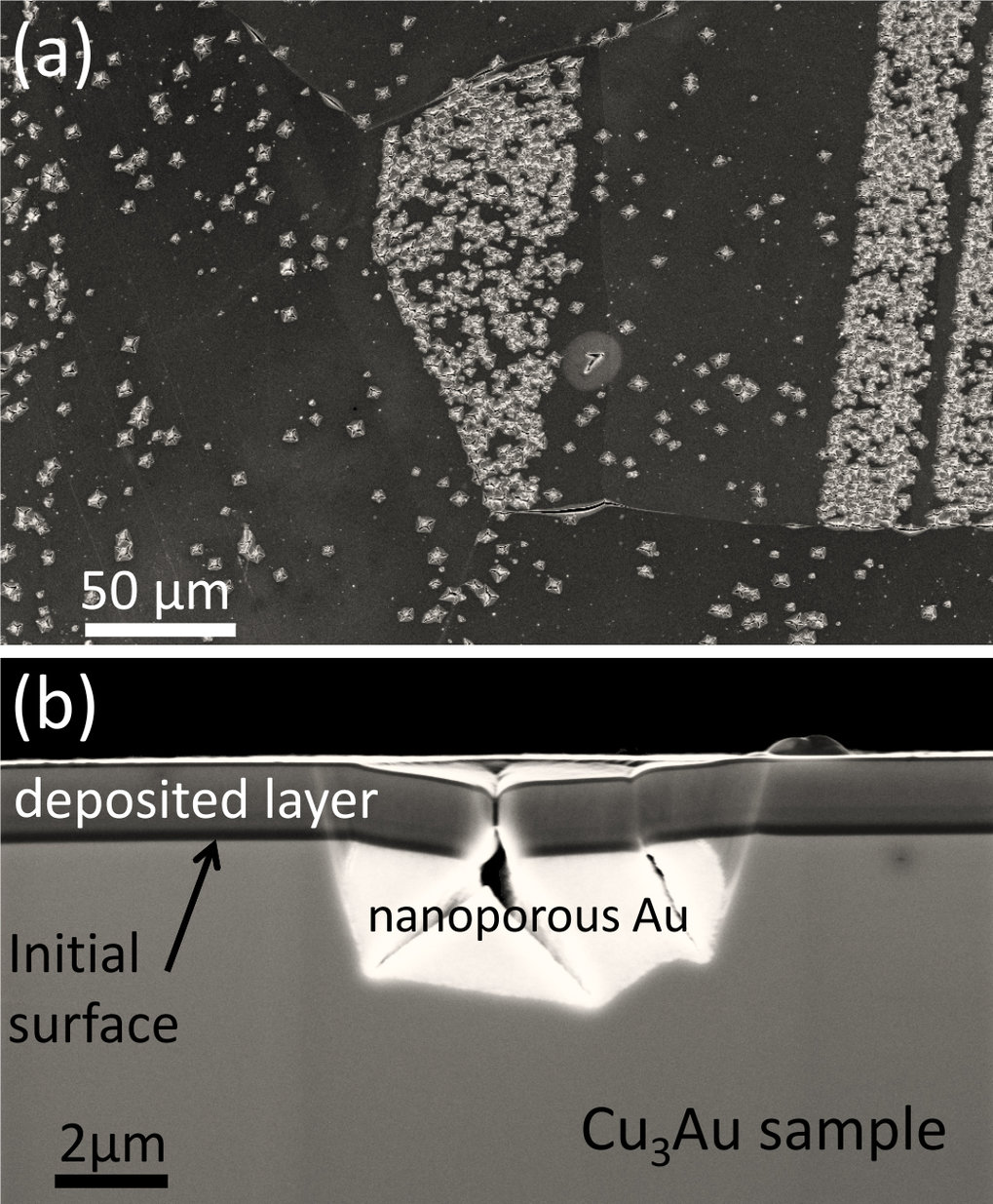 Fig.2: Scanning electron micrographs of a dealloyed Cu3Au polycrystalline sample. (a) Plane view showing grains with different crack densities. (b) Cross-section showing one specific crack that extends into the nanoporous material.