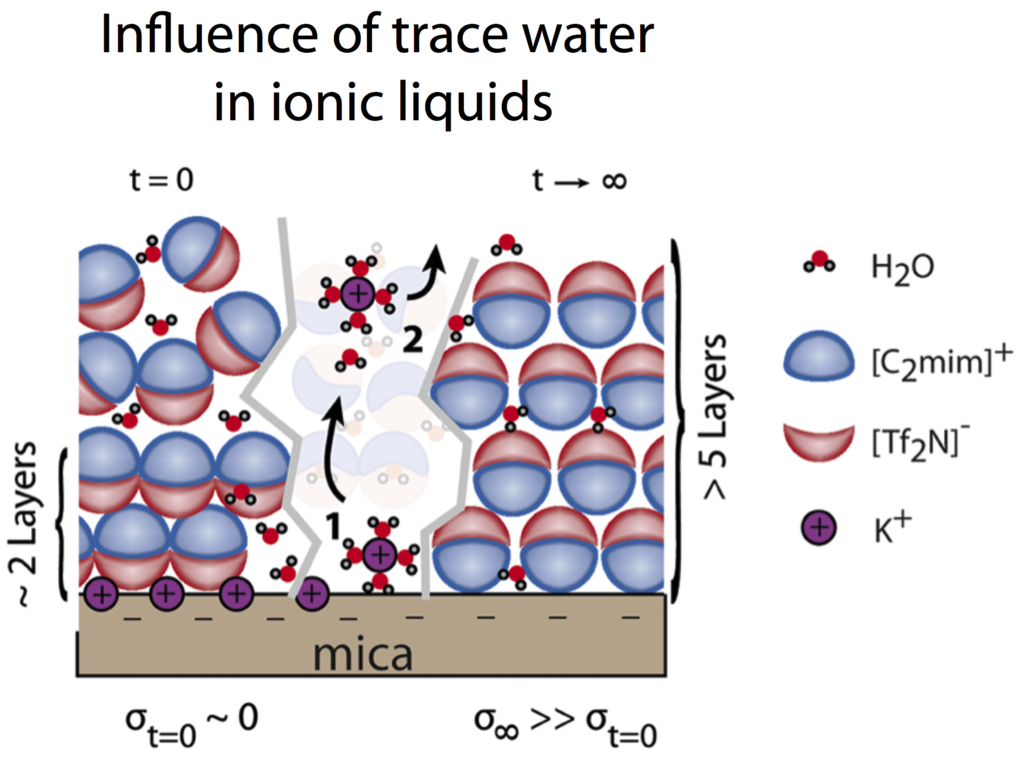 The importance of water for molecular ion structuring and charging mechanism of solid interfaces in room temperature ionic liquid (RTIL) is unclear and has been largely ignored. In our recent article we reveal that water significantly alters the charging and layering mechanism of ionic liquids at charged and electrochemically polarized surfaces. Water dissolves potassium ions on mica surfaces, leading to high surface charging and strong water induced layering, and conversely water stabilizes cation layers on polarized gold electrodes.