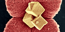 "<div style=""text-align: justify;"">Intelligent design of nanostructured materials forms the basis for high efficiencies in energy applications. 3D hierarchical niobium oxide nanostructures are investigated, as they form self-organized using a facile one-step synthesis approach. Electron microscopic investigations in combination with different spectroscopic methods are used to analyse these superstructures heading towards a better understanding of the forces involved in self-organization at the nanoscale.</div>"